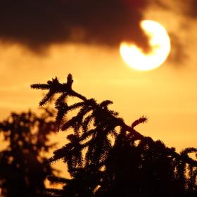 Smrk mává slunci na rozloučenou