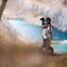 Pes v lomu