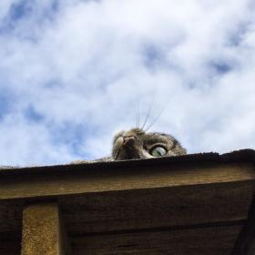 Na střeše