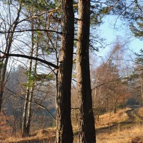 V lese ... I.