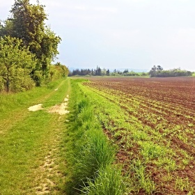 Stromy, cesta, pole