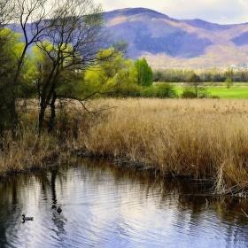 Zalužanský rybník