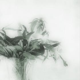Broken Flowers II.