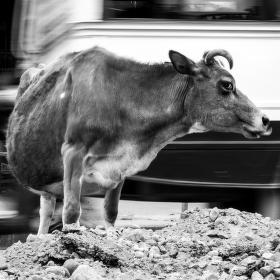 Nepali street