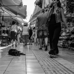 Řecký pes