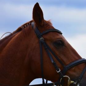 Kůň, krásné a vznešené zvíře