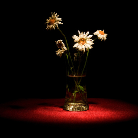 Broken Flowers XII.
