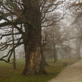 Kolem starých dubů