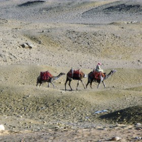Velbloudář (Gíza, Káhira - Egypt)