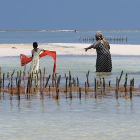 Všechny ženy starého rybáře
