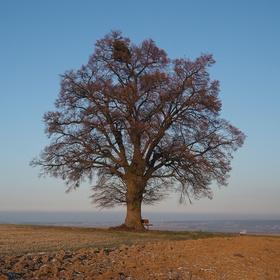 U oblíbeného stromu...