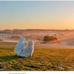 Mrazivé ráno nad Olešnou