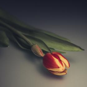 (po)Valentýn