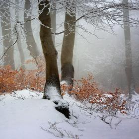 ...v zajetí mrazu