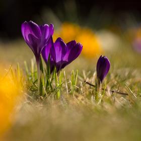 Jaro je za dveřmi