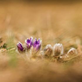 Ozdoba jara