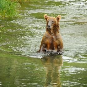 obrázky z přírody Severní Ameriky (18)