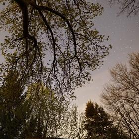 Stromy a hvězdy