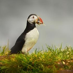 obrázky z islandské přírody (48)