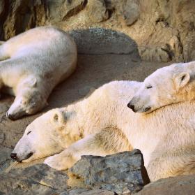 """"""" Snění o polární krajině """""""