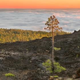 obrázky z Tenerife (1)