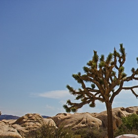 Joshua Tree 11