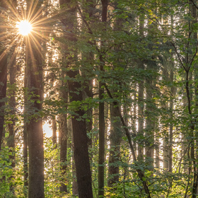 Východ slunce v listnatém lese