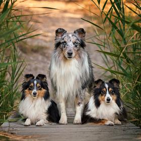 Barevná rodinka