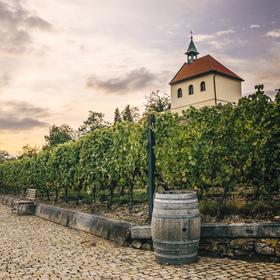 Stmívání ve vinici