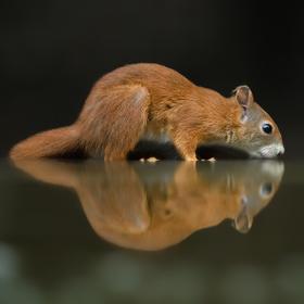 Žíznivá veverka ...