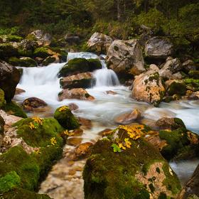 Krajcarica ali Zadnjica-Slovinsko