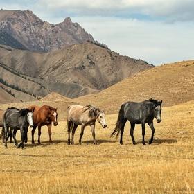 Na horských pastvinách