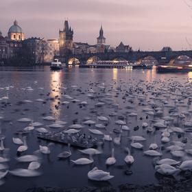 Labutí Praha