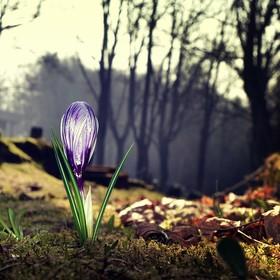 Lampička na hřbitově