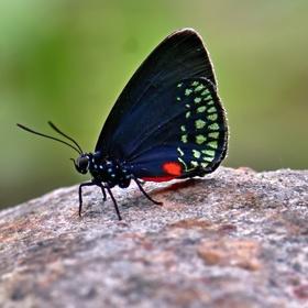 Tropický motýl - motýlí dům Praha