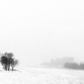 Sneží v slivkovej aleji