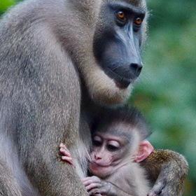 Opičí matička
