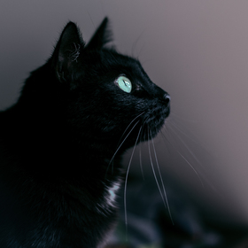 Kočičí zvídavost