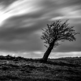Navzdory větru II