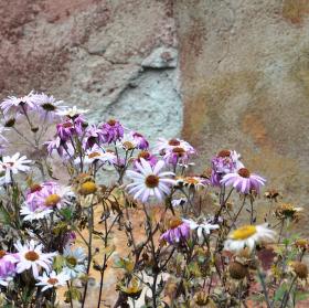 Kvetoucí zeď