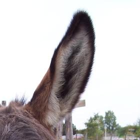 Jsem jedno veliké ucho!