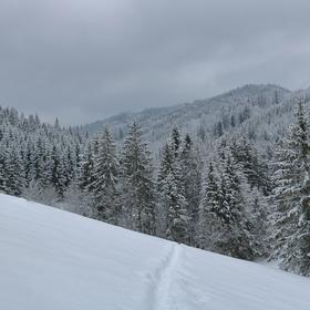 Sněžný les