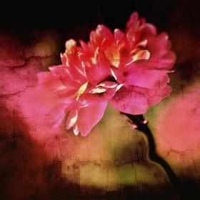 Trochu jiná květina