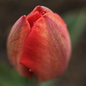 Jarní  pohledy VIII