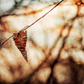 Podzimní bojovník