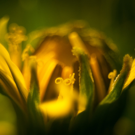 Jaro v Beskydech