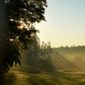 V ranním světle