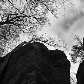 Stromy ve skalách