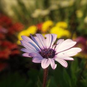 Kvetinkové pozdravenie