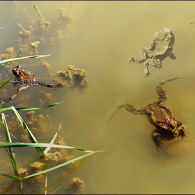 Hlavňovský rybník zblízka